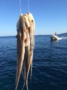 Adriatic Octopus