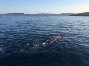 Snorkeling Orebic